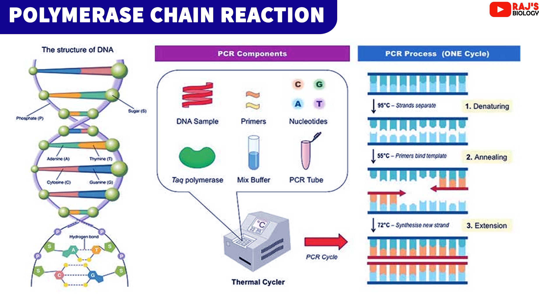 PCR Steps, PCR Notes