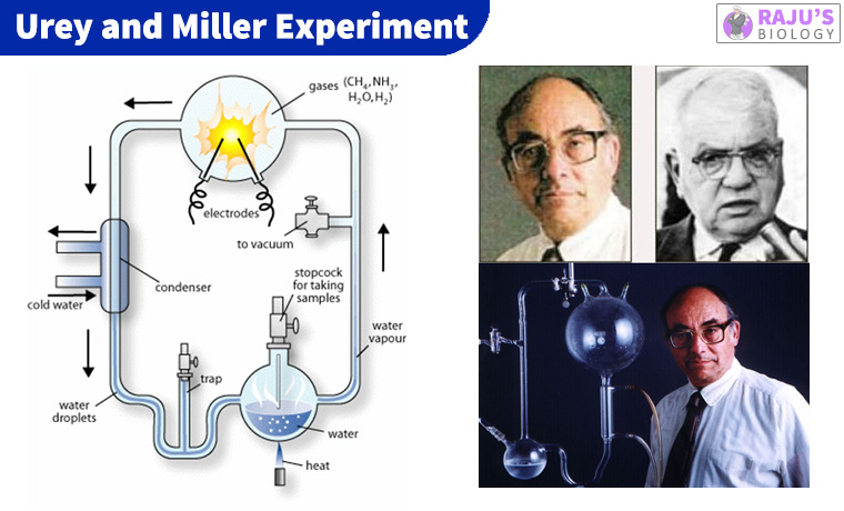 Urey and Miller Experiment