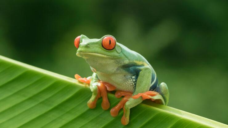 Amphibia General Characteristics