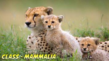 Mammalia General Characteristics