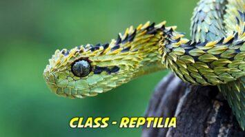 Reptilia General Characteristics